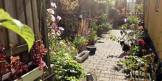 små haver indretning