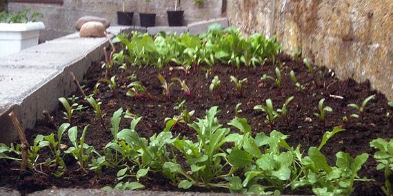 Urtehavebed   at have en lille urtehave