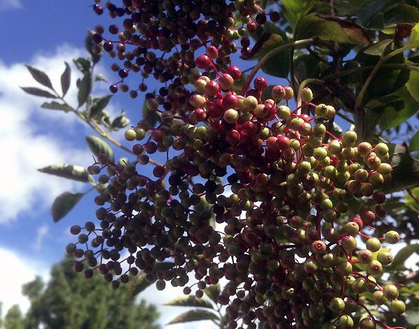 Nyd at det er sensommer i din lille have