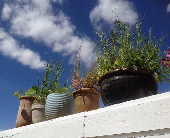 Sæt krukker med blomster op i højden i din lille have