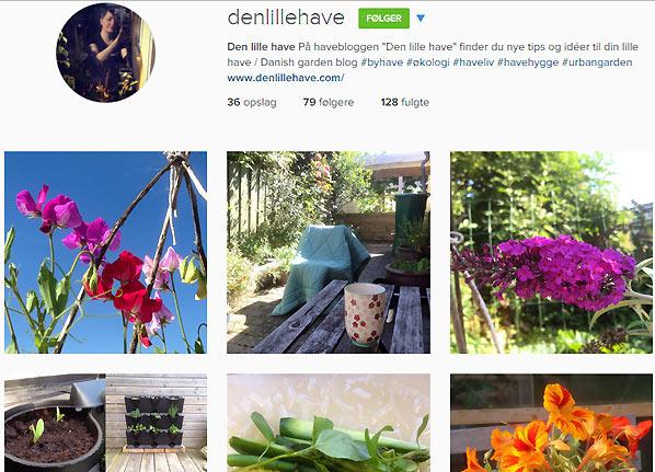 Den lille have på Instagram