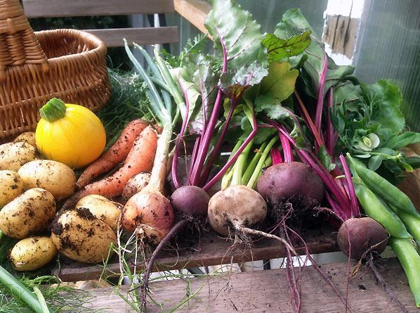 Grøntsager og høsttid i den lille have