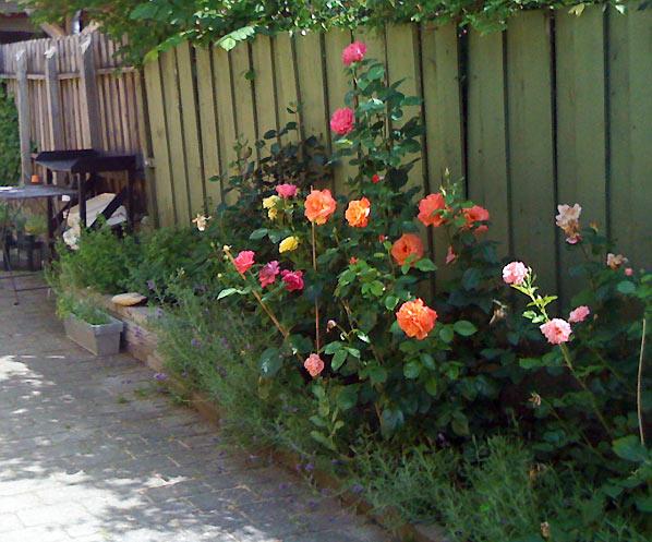 Sensommer i den lille have