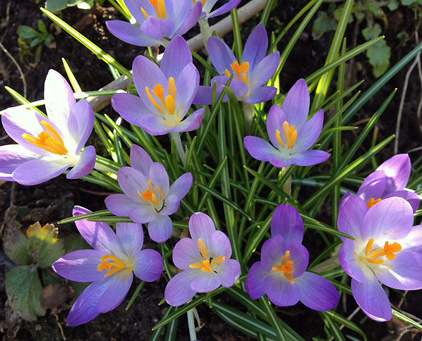 Stemninger fra den lille have i april
