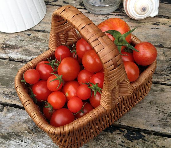 Lækre ovntørrede tomater