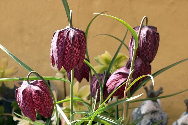Blomster i marts vibeæg