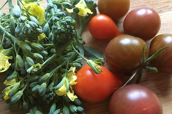 Broccoli og tomater - selvforsyning i min lille have