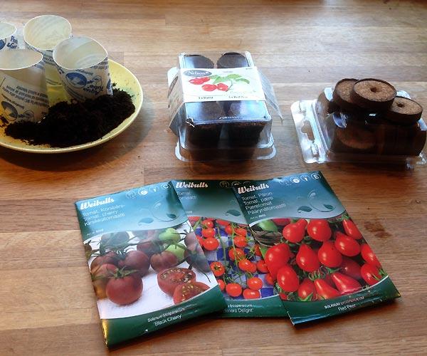 Tomater til forspiring i den lille have